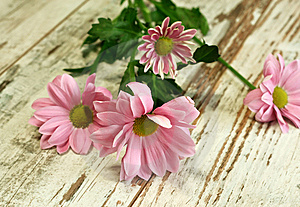 Beautiful Chrysanthemum Flower On Old Wooden Stock Photos - Image: 13858483