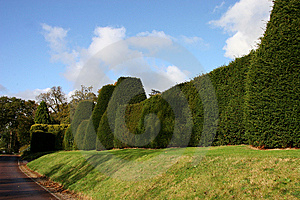 Sculptured Hedgerow Stock Image - Image: 13861401