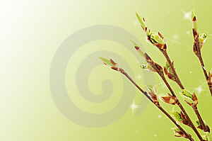 Blossoming Germs Of A Bird Cherry Stock Images - Image: 13864454