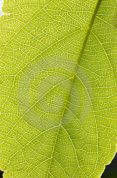 Under The Leaf Stock Image - Image: 13866931