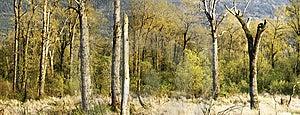 Spring Marsh Panorama Stock Image - Image: 13870321