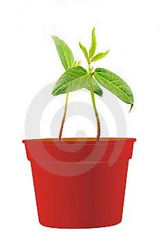 Mung Bean Seedlings Stock Photo - Image: 13870470