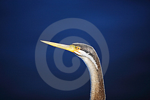 Bird's Head,West Australia Stock Photography - Image: 13870912