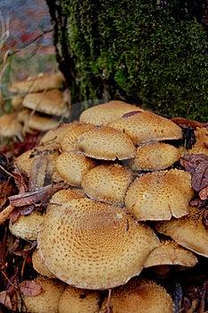 Fungus Royalty Free Stock Photo - Image: 13876405