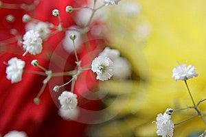 Bouquet Stock Images - Image: 13879704