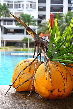 Coconuts At A Hotel Poolside Stock Images - Image: 13882704