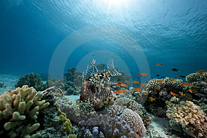 Ocean, Coral And Fish Stock Photos - Image: 13882993
