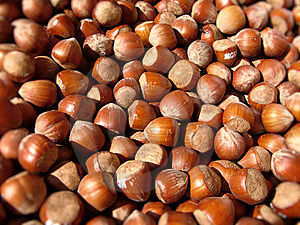 Hazelnuts Royalty Free Stock Photo - Image: 13885355
