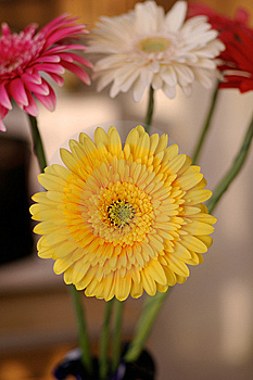 Bouquet From The Daisies Royalty Free Stock Photography - Image: 13890147