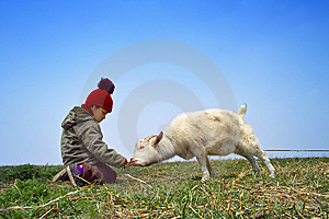 Young Boy And The Goat Stock Photos - Image: 13892513