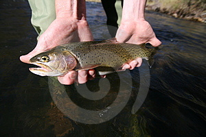 Fish #3 Stock Image - Image: 1391511