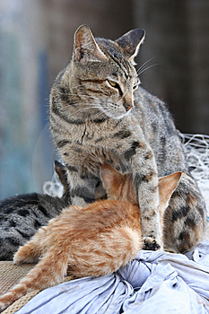 Protective Cat Stock Images - Image: 13903314
