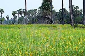 Grassland In Thailand Royalty Free Stock Photos - Image: 13903408