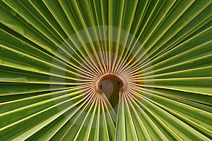 Palm Tree Leaf Stock Images - Image: 13905574