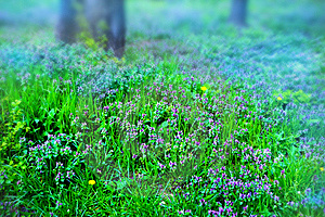 Grass And Blue Flowers Royalty Free Stock Photos - Image: 13906868