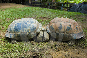 Two Turtles Kissing Stock Photo - Image: 13908390