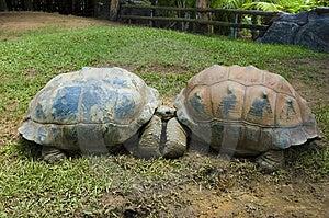 Two Turtles Kissing Stock Photo - Image: 13908390