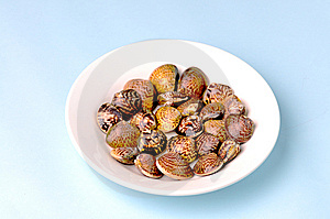 Clam Stock Photography - Image: 13910412