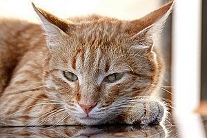 Cat Stock Image - Image: 13921141