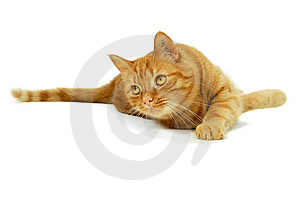 Red Cat Royalty Free Stock Photo - Image: 13923365