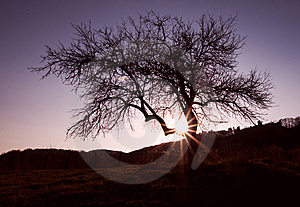 Silhouette Of Tree Stock Images - Image: 13925784