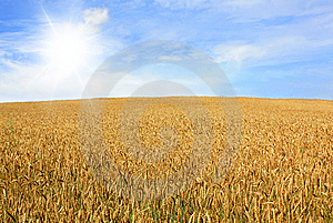 Wheat Field Stock Images - Image: 13936954