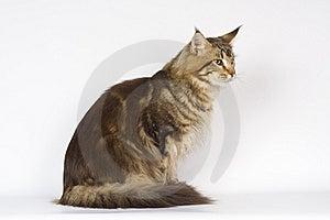 Big Cat Royalty Free Stock Photo - Image: 13941105