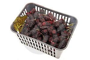 Blackberries Stock Images - Image: 13942154