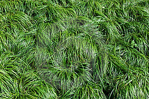 Green Grass Texture Royalty Free Stock Images - Image: 13942919