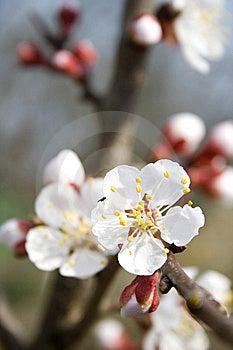 Spring Stock Photo - Image: 13948320