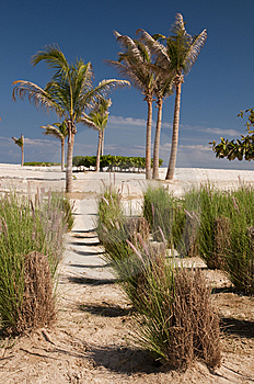 Palm Oasis In The Desert Royalty Free Stock Photography - Image: 13948727