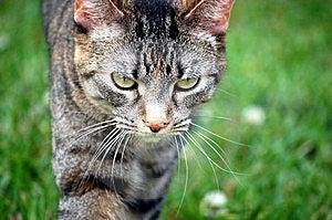 Кот на Prowl Стоковые Изображения RF - изображение: 13958529