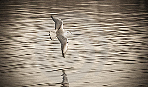Gull Stock Photography - Image: 13958922