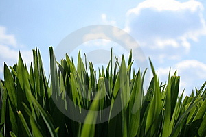 Grass And Clouds Stock Photos - Image: 13962503