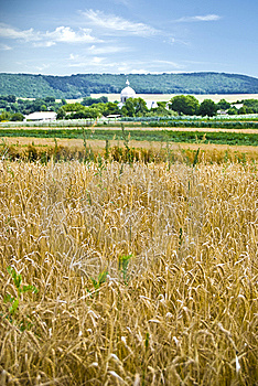 Village With A Wheat Field Stock Image - Image: 13962731
