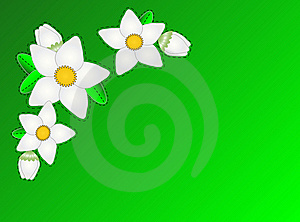 Vector Eps10.  Green Copy Space With White Flowers Royalty Free Stock Photography - Image: 13964877