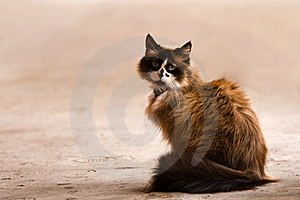 Cute Domestic Cat Royalty Free Stock Photos - Image: 13968188