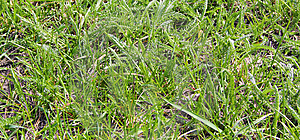 Texture Of Grass Stock Images - Image: 13969104