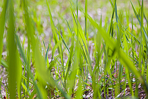Texture Of Grass Stock Photos - Image: 13969123