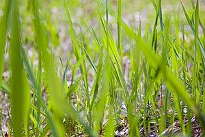 Textuur Van Gras Stock Foto's - Afbeelding: 13969123