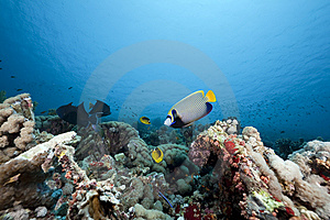 Coral And Fish In The Red Sea Royalty Free Stock Image - Image: 13972826