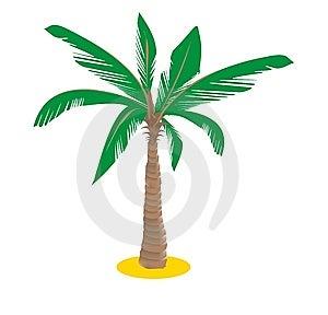 Palm Stock Photos - Image: 13973233