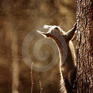 Cute Squirrel Stock Images - Image: 13973754