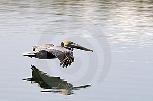 Gliding Royalty Free Stock Photography - Image: 13976967