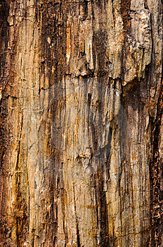 Fossil Wood Surface Color And Texture Stock Photo - Image: 13980840