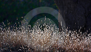 Grass In Winter Sun Royalty Free Stock Images - Image: 13986509