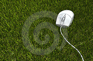 Mouse On The Grass Stock Image - Image: 13987161
