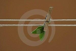 Sage Stock Photo - Image: 13995530