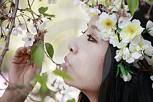 Cherry Blossom Girl Royalty Free Stock Photos - Image: 13999678
