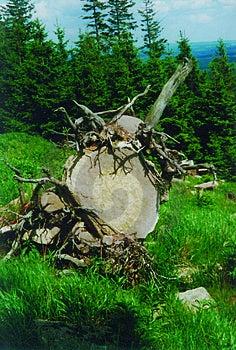 De Boom van de bergsteen Stock Afbeeldingen